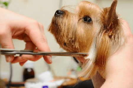 Grooming Roseorwell Pups Pet Grooming Services